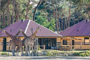 Luxe Vakantiepark Nederland - Safari Resort Beekse Bergen