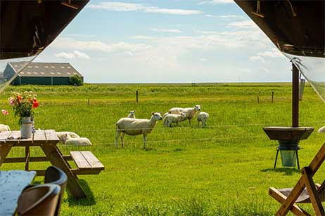 Boerderijvakantie bij Boerderij Ameland - Uitzicht vanuit tent