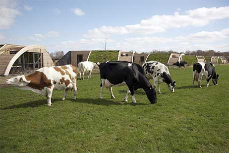 Boerderijvakantie bij Koe in de Kost in Heeten - Vakantiehuis