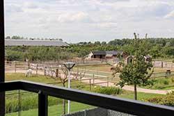 Familiehotel Fruitpark Hotel & Spa in Ochtend - Kinderboerderij