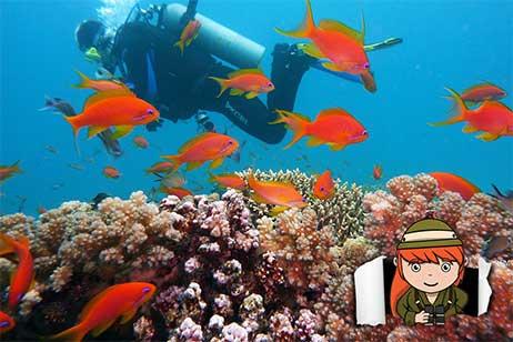 De 5 leukste duikresorts in Egypte met eigen huisrif en duikschool